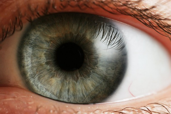 Ophthalmology Interest Group   UW School of Medicine